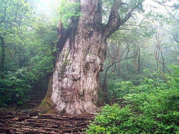 Patriarca da Floresta